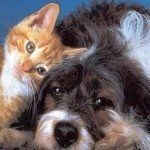 218912__dog-and-kitten-together_p